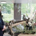 merkel-şi-panda