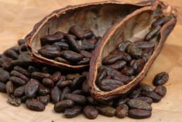kakao-cekirdegi
