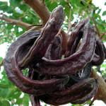 keciboynuzunun-faydalari-ve-zararlari
