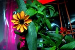 sensörlü-bitki